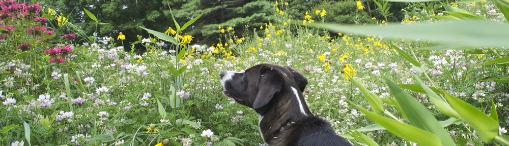 Watching for Wildflowers