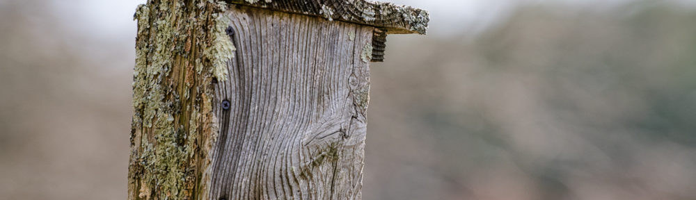 sparrow, nature, Rocky Narrows, Axie Breen Photography